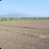 農地(田・畑)